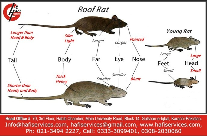 Commercial Rodent Control Services